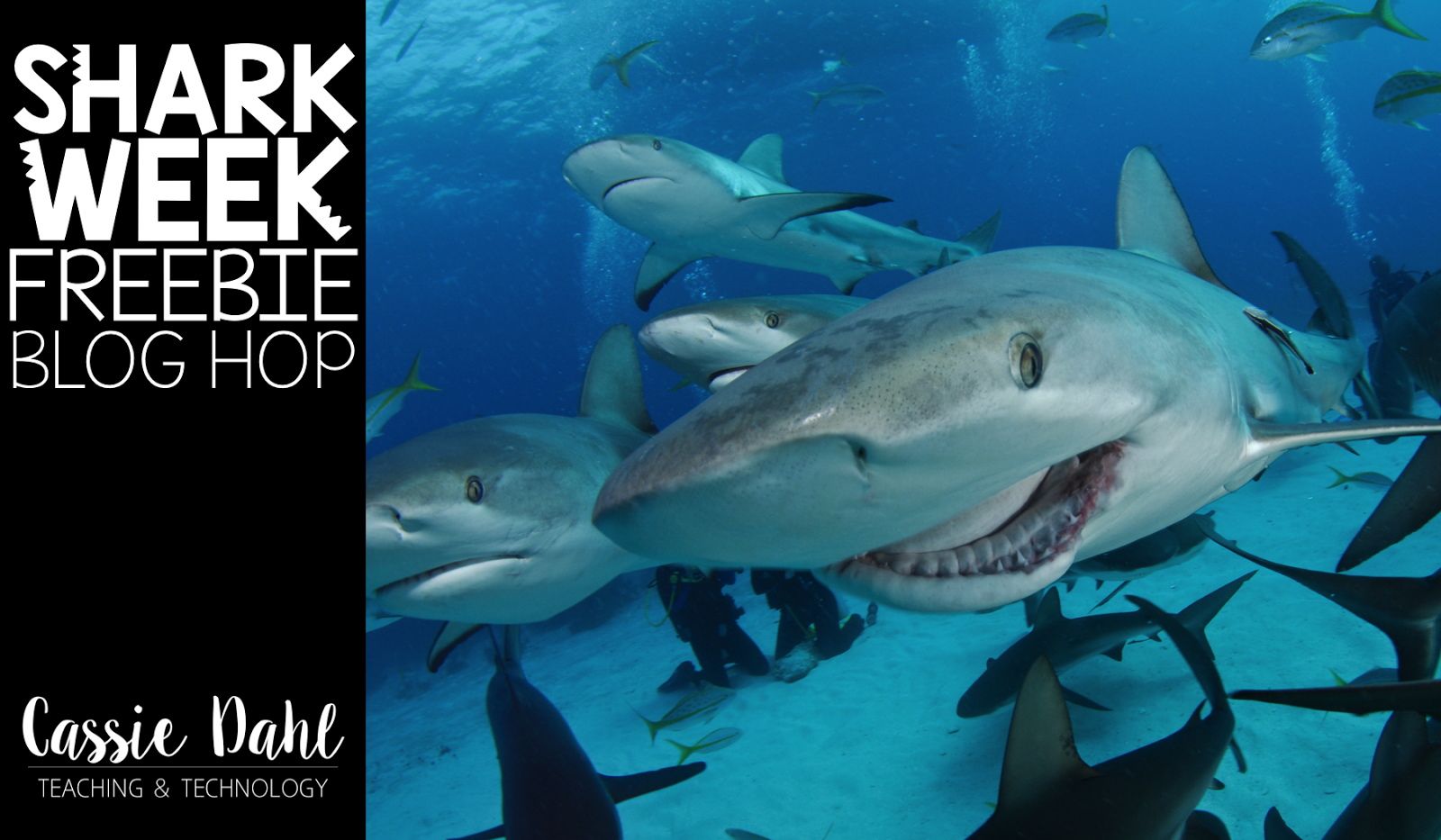 Shark week is a great way to engage students with some important skill practice.
